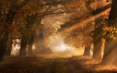 The Gifts of Autumn and the Metal Element